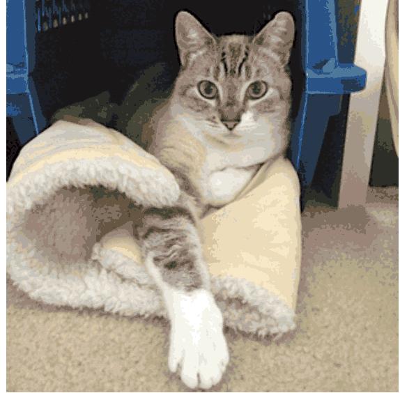 mama-cat