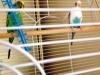 Julie's parakeets
